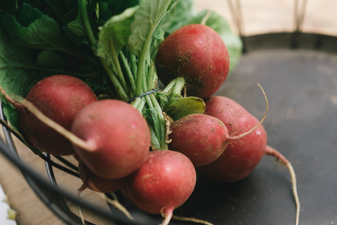 Boston Organics - Red Globe Radishes