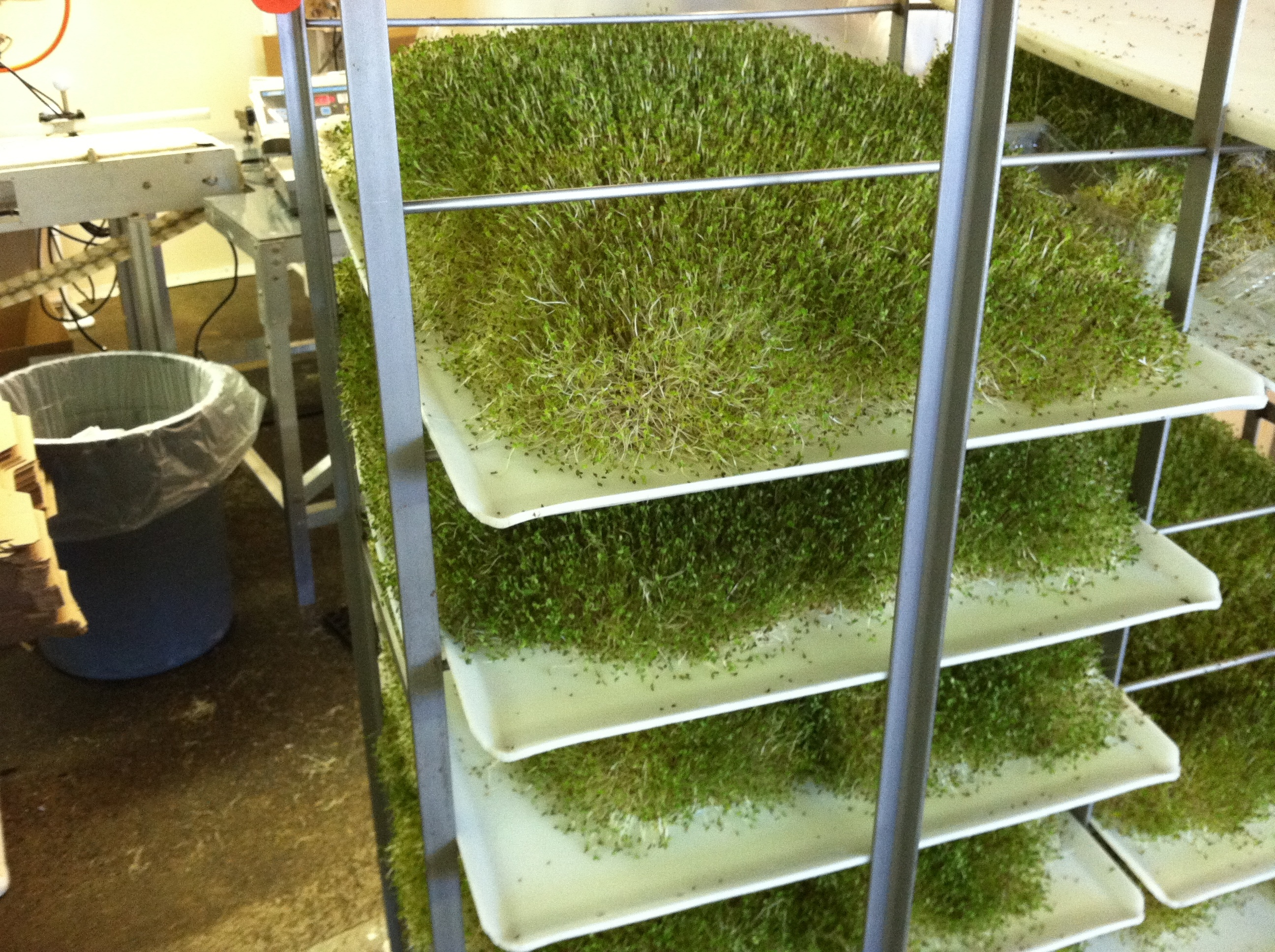 Boston Organics - Jonathan's Organics sprouting rack