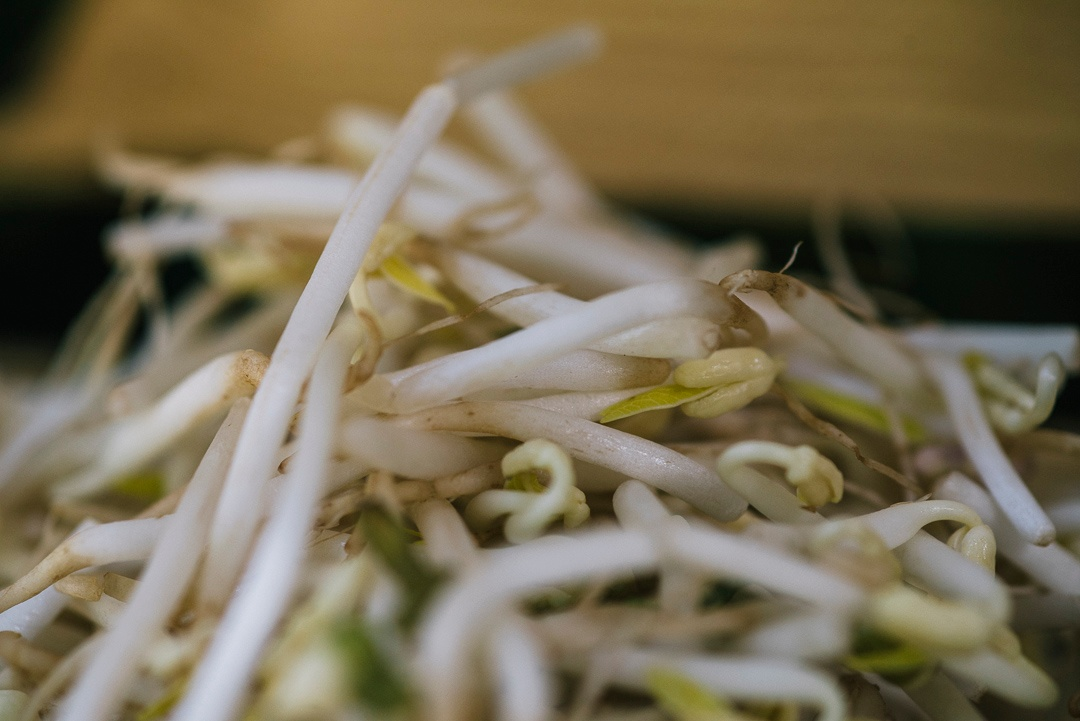 Boston Organics - Mung Bean Sprouts
