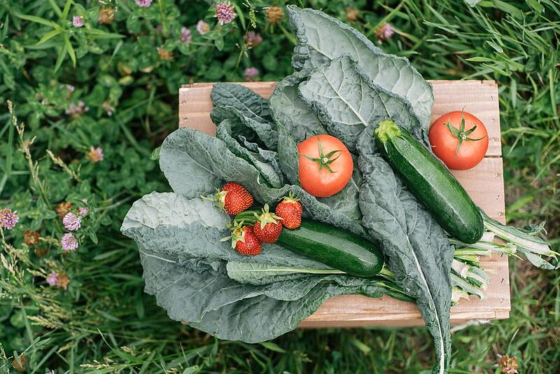 Local tomatoes, strawberries, zucchini, kale | Boston Organics