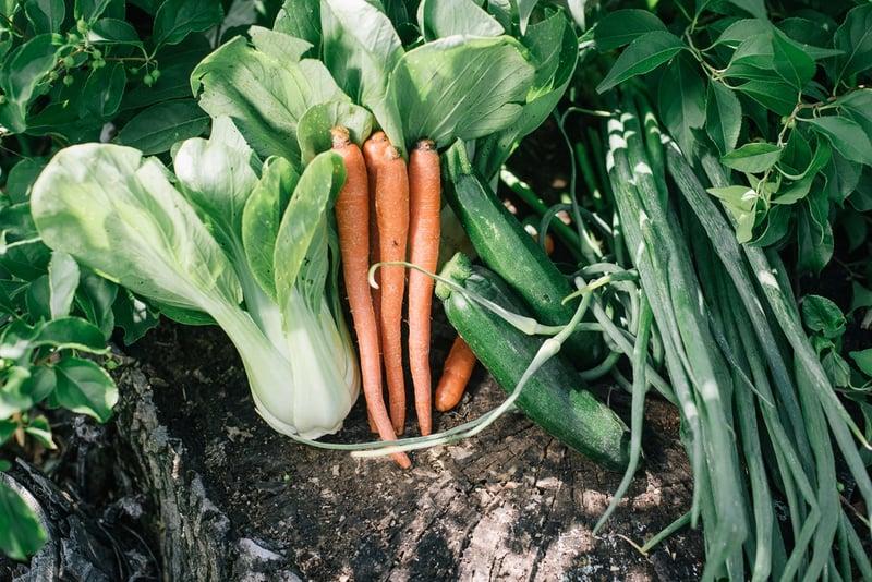Local carrots, bok choy, zucchini, scallions | Boston Organics