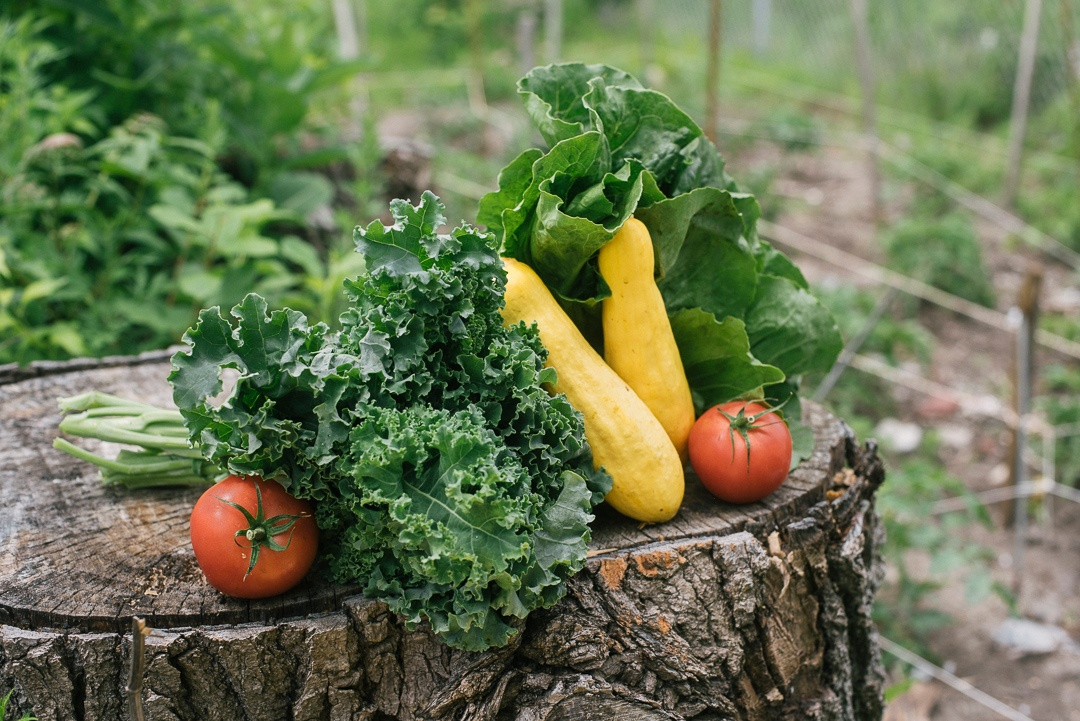 Local Organic Vegetables   Kale, Tomatoes, Lettuce, Zucchini