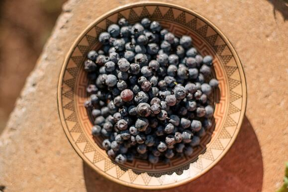 blueberries_wild_bowl_1.jpg