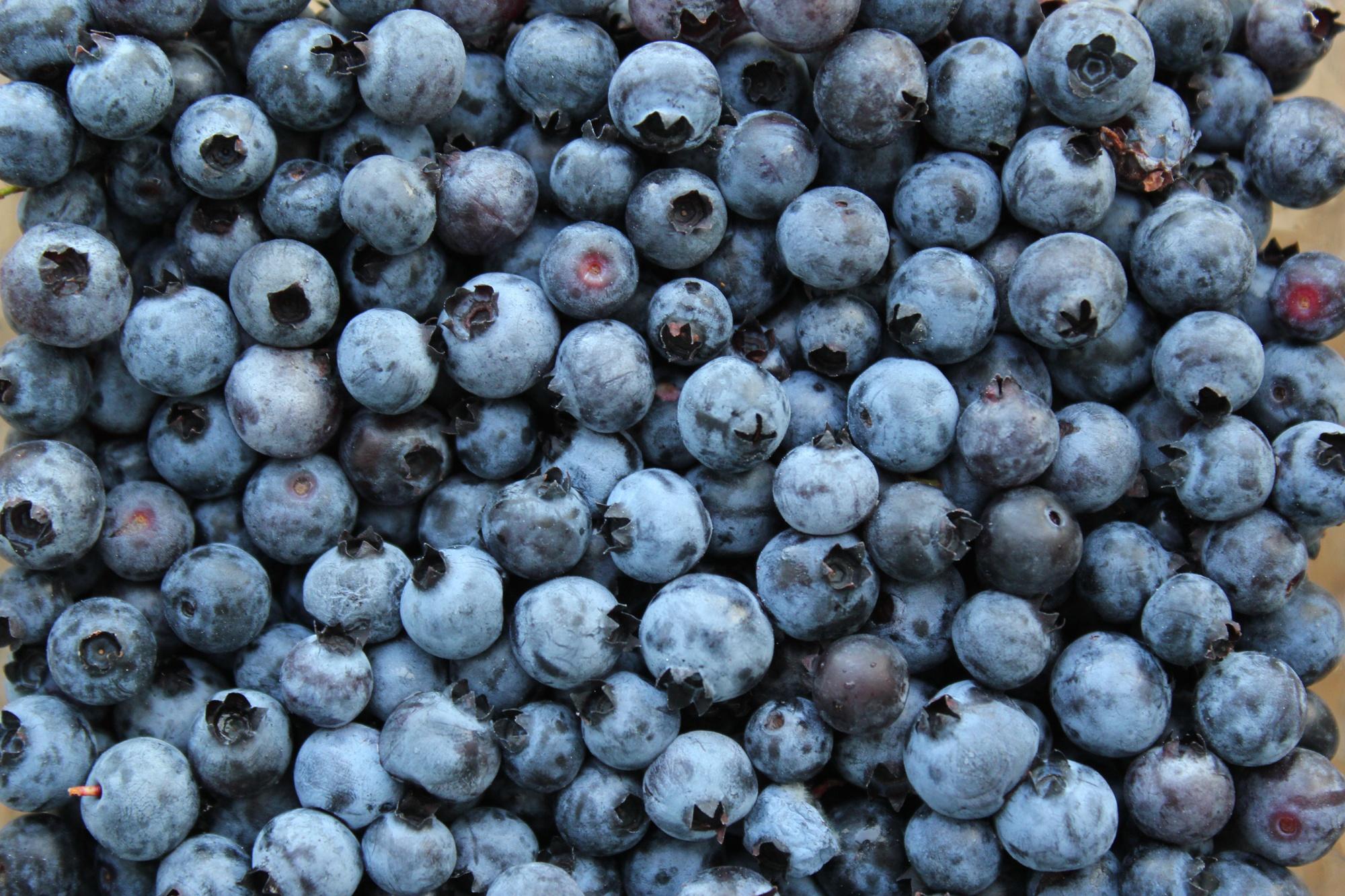 Wild Maine Blueberries