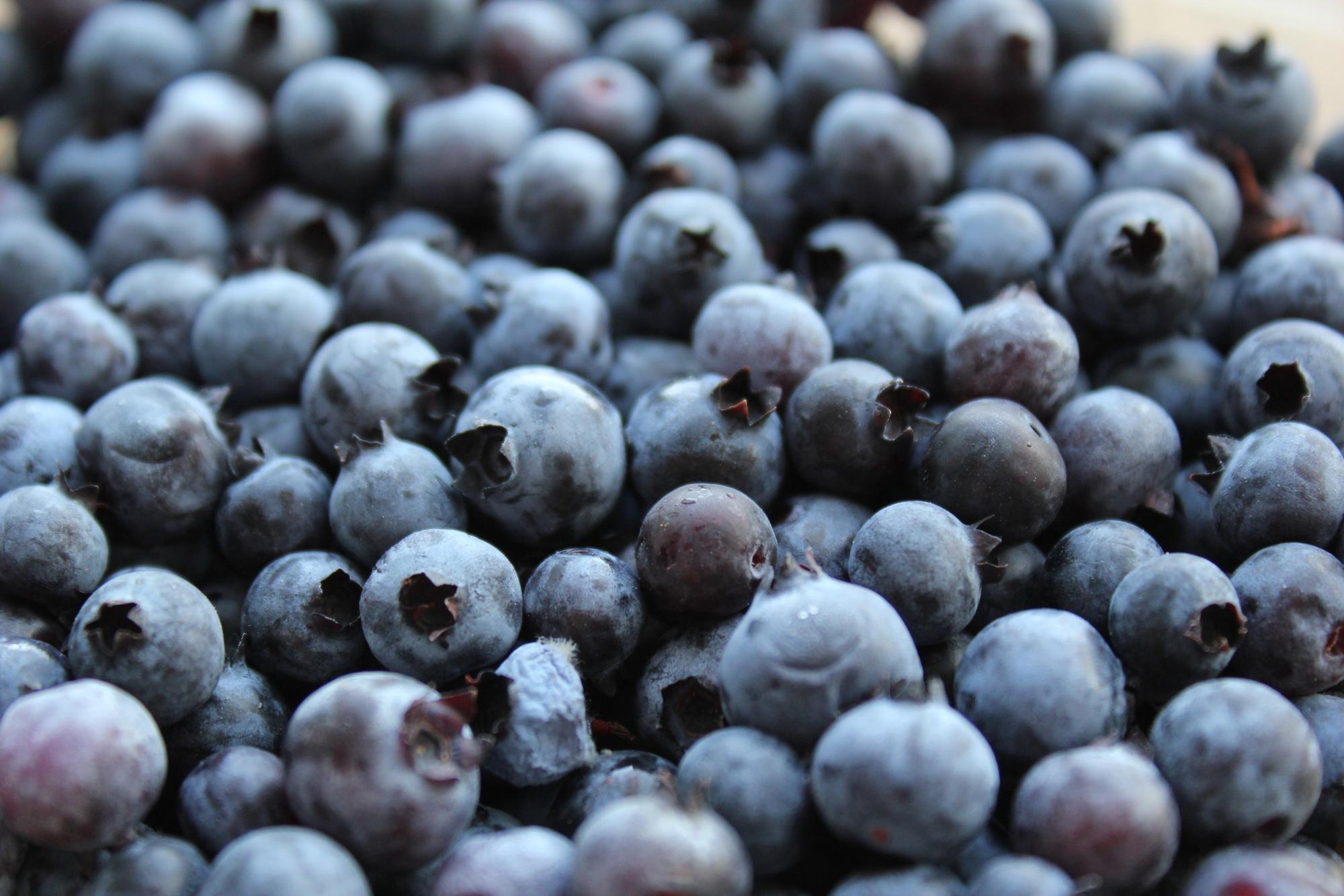 wil_maine_blueberries.jpg