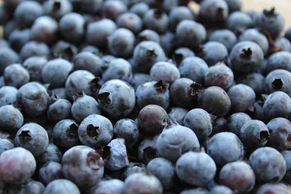 blueberries_wild_closeup_03_2000px