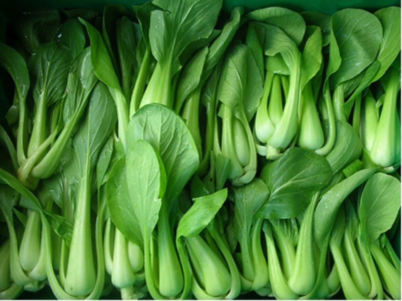 Boston Organics - Bok Choy