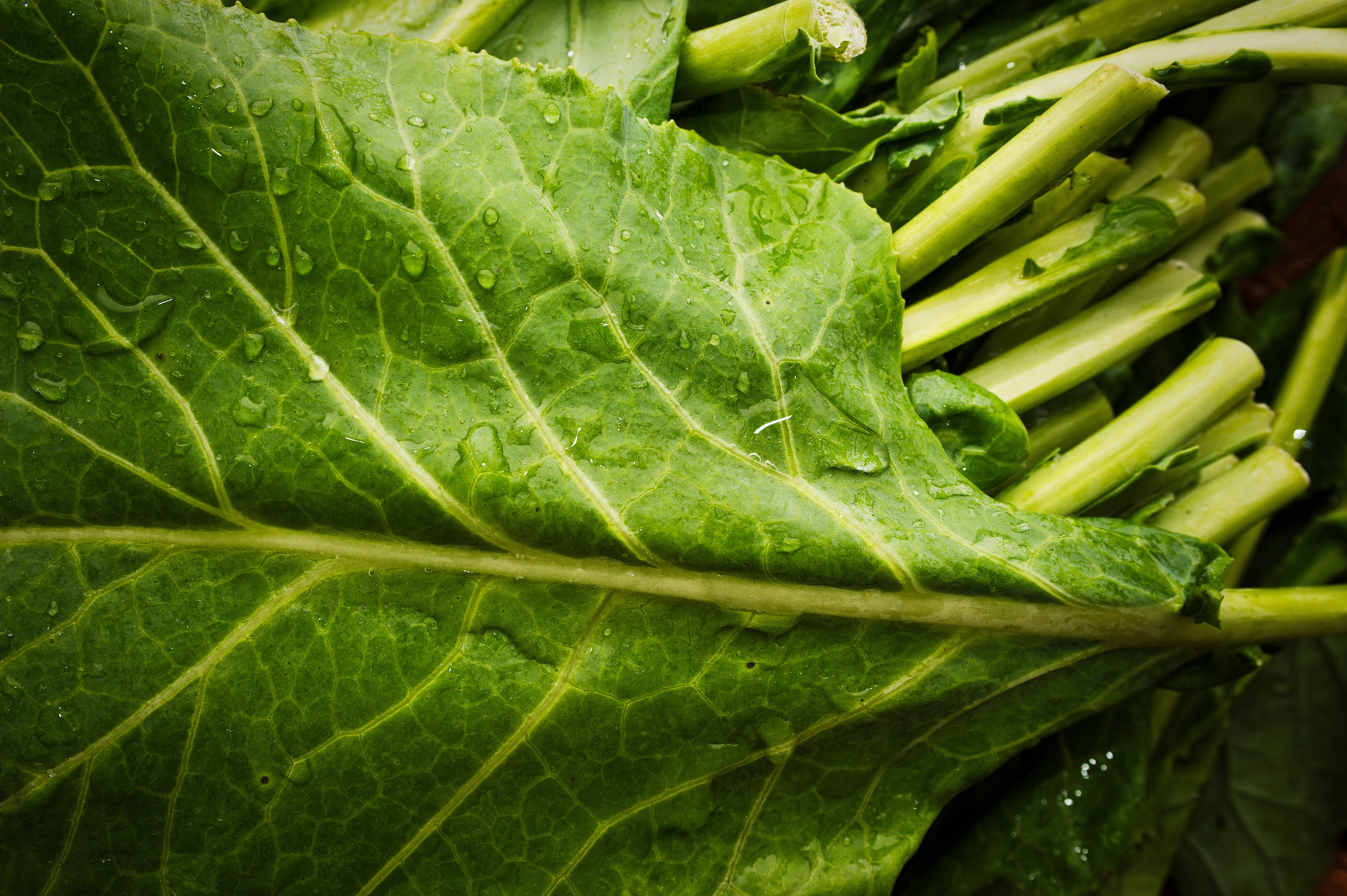 Boston Organics - Collards