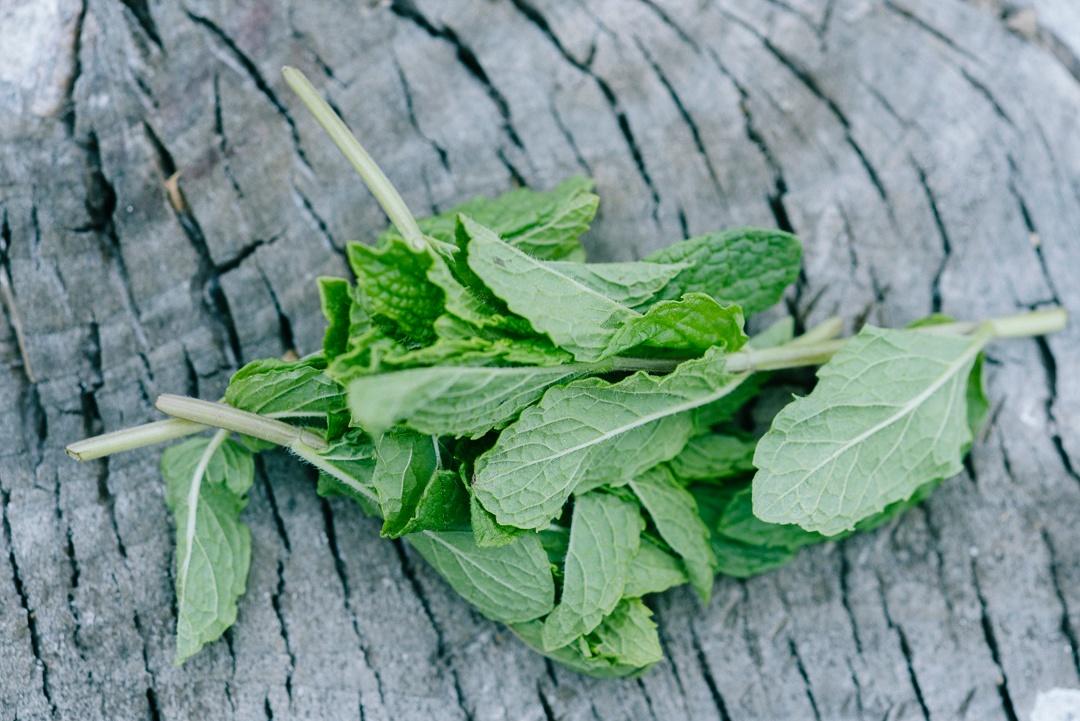 Boston Organics - Mint