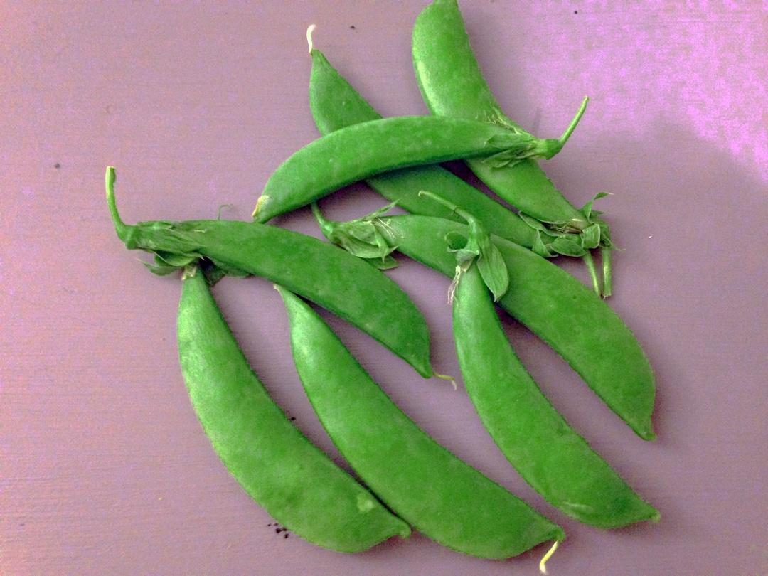 Snap Peas   Boston Organics