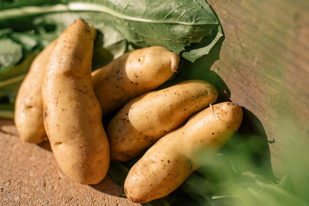 Boston Organics - Fingerling Potatoes