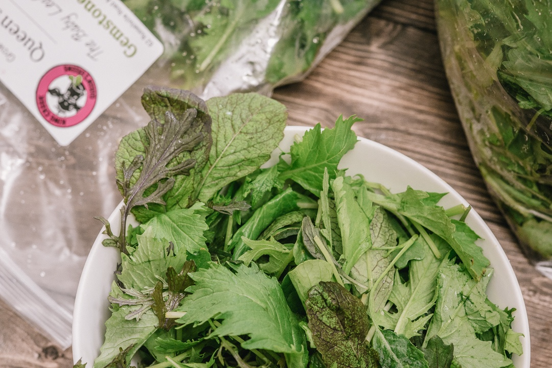 Boston Organics - Queen's Greens Gemstone Salad Mix