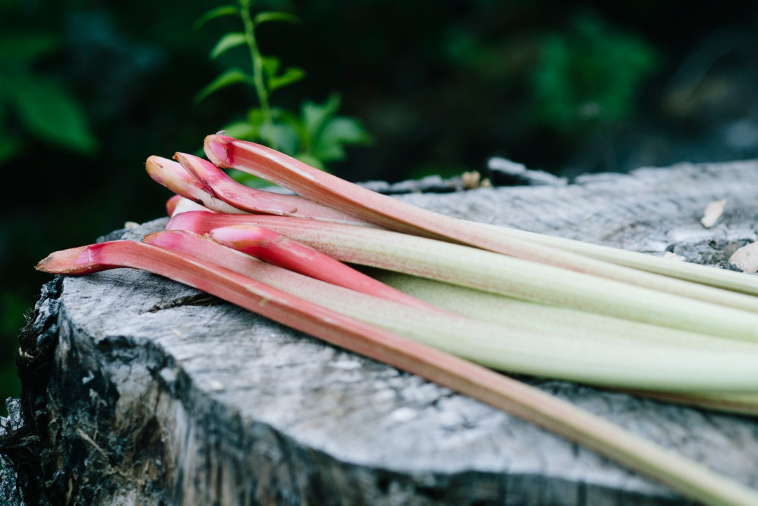 Boston Organics - Rhubarb