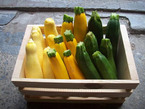 summer_squash_mixed_crate_3050px
