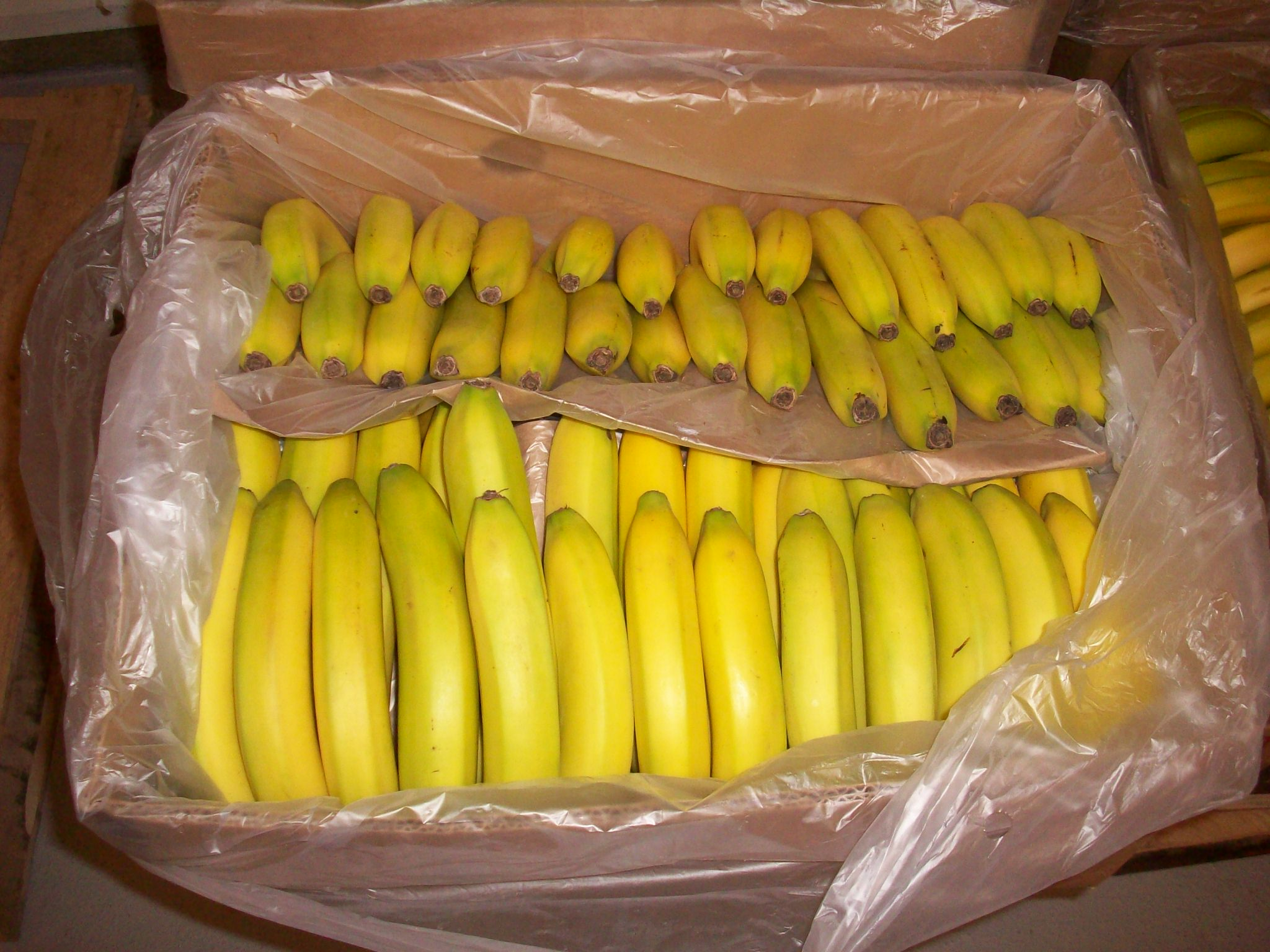 If we each throw out 20lbs of food per month, that's like tossing half a case of bananas!