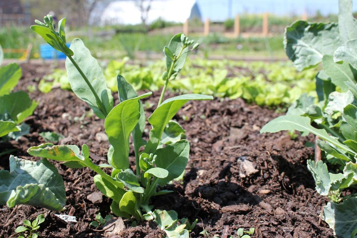 Boston Organics - Community Garden
