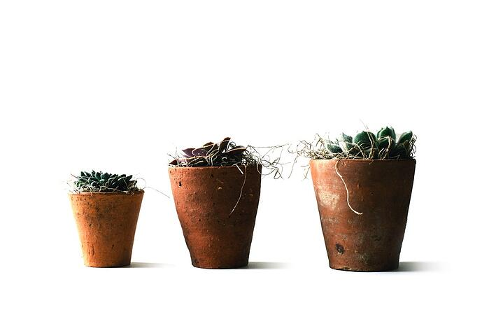 Try experimenting with low-fuss potted plants.