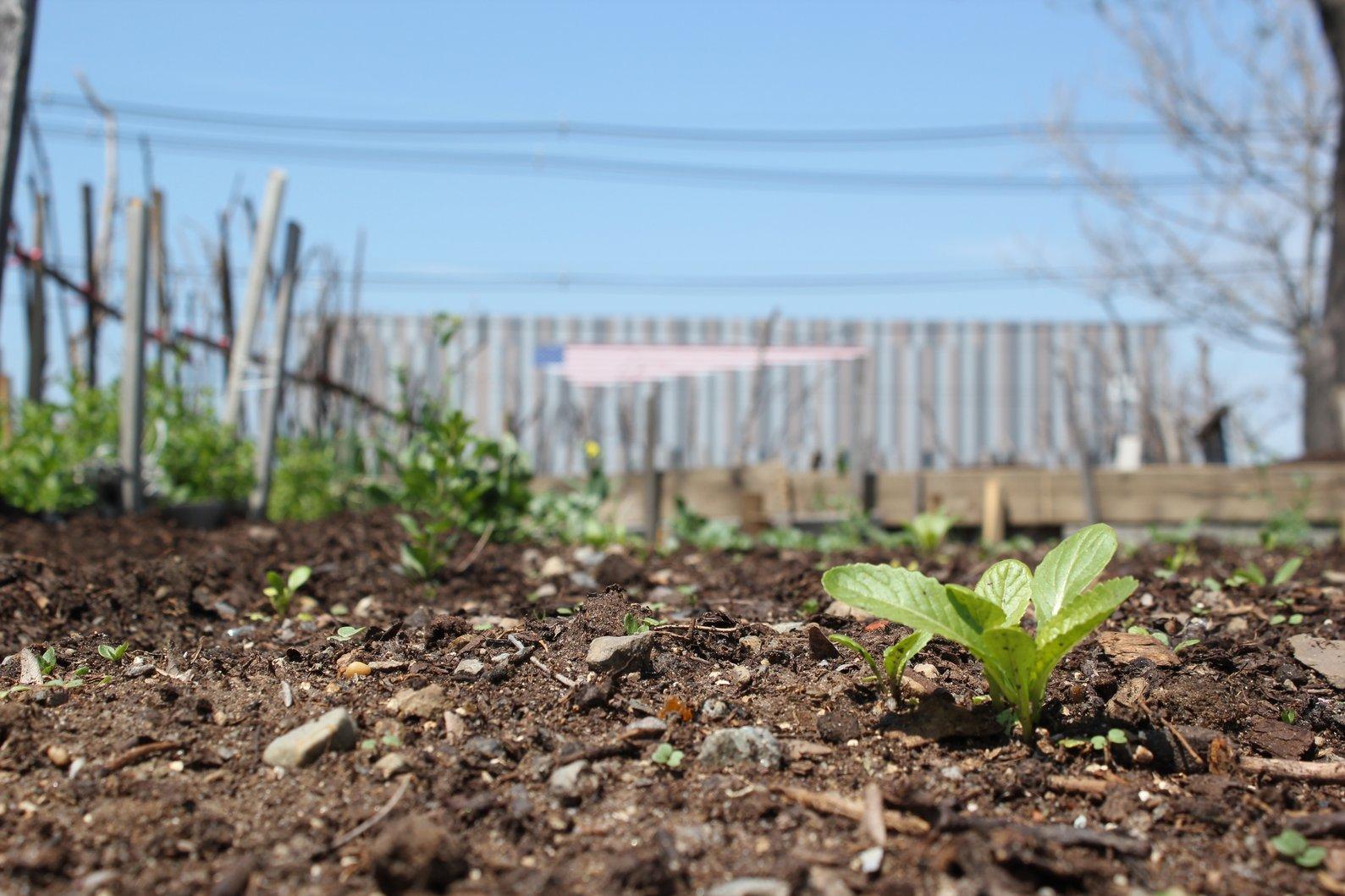Some Boston Organics staff enjoy walking around the community garden across the street.