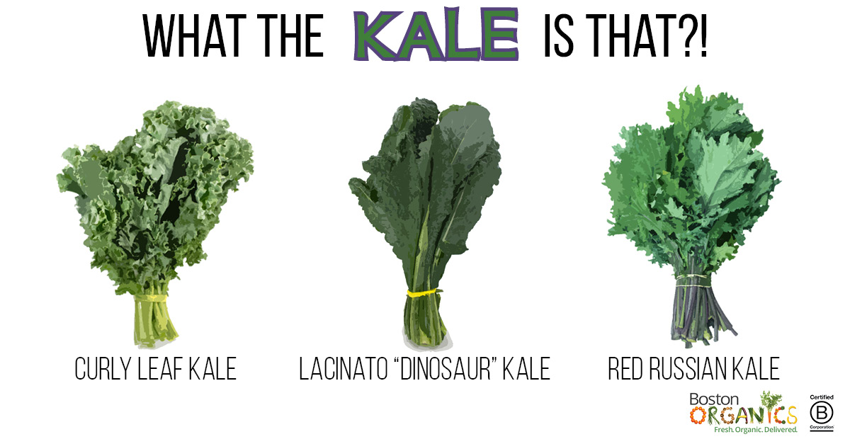 Kale Varieites Infographic | Boston Organics