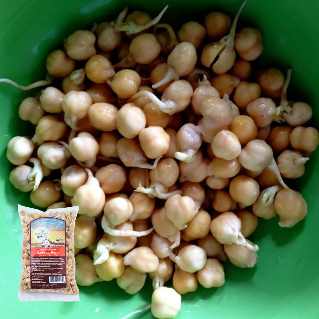 garbanzo_beans_sprouted_sprouts_jonathansprouts_jenhoy_spruceeats_1080px