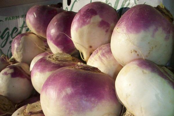 Boston Organics Purple Top Turnips