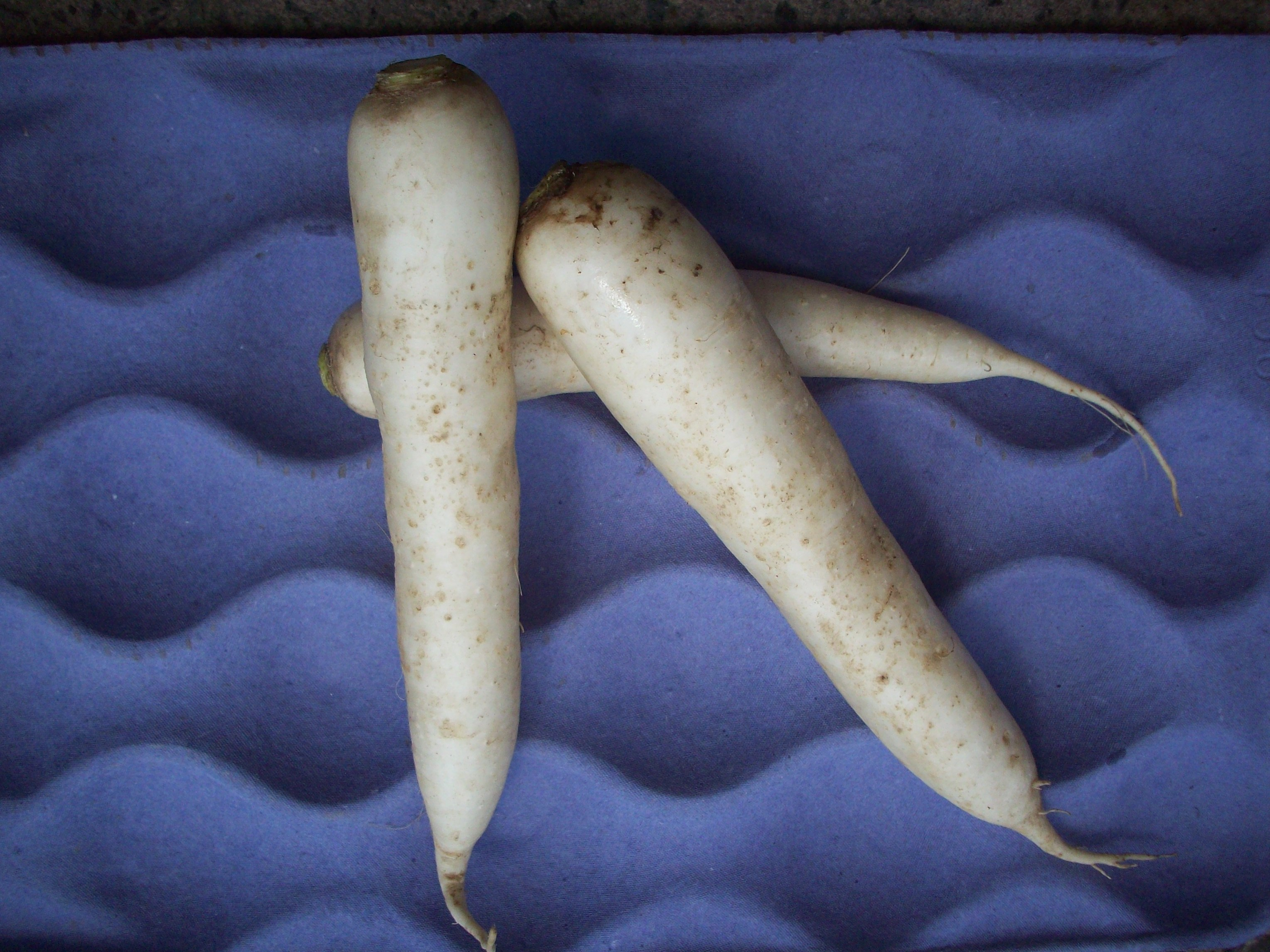 Daikon Radish - An Introspection