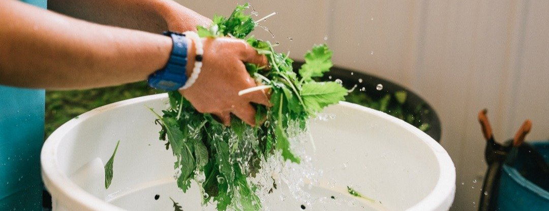 wash your greens