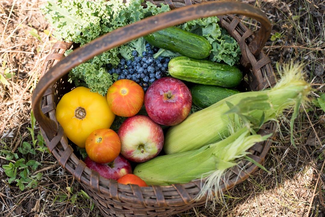 Local Tomatoes, Blueberries, Corn | Boston Organics