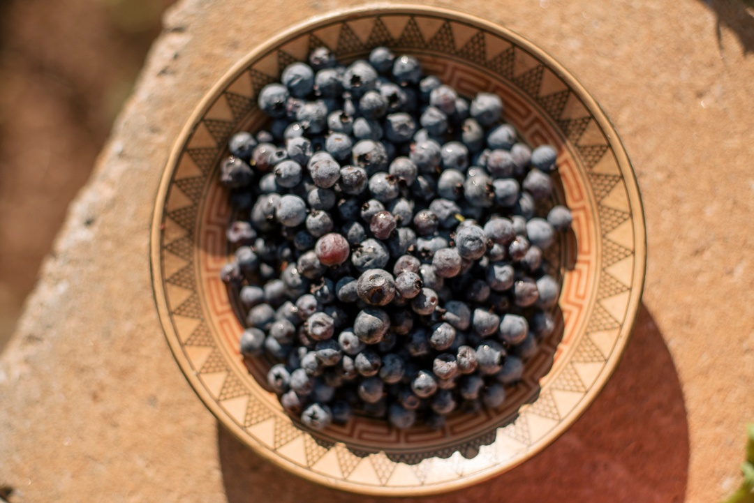 Wild Blueberries Are Back!