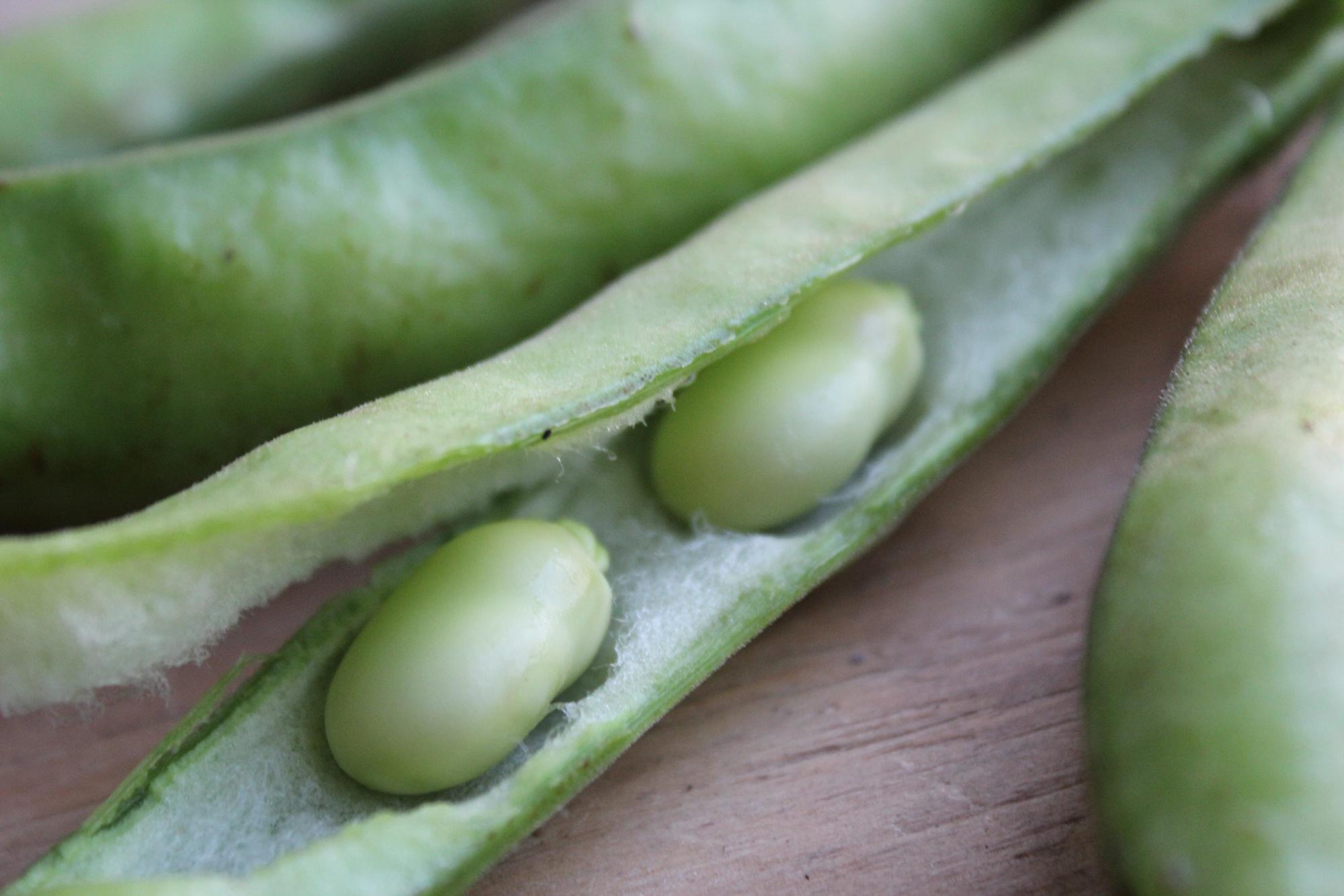 Fava Beans Peeled | Boston Organics
