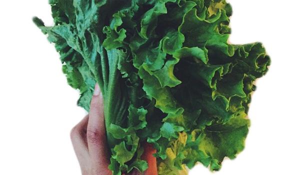 leafy lettuce hand