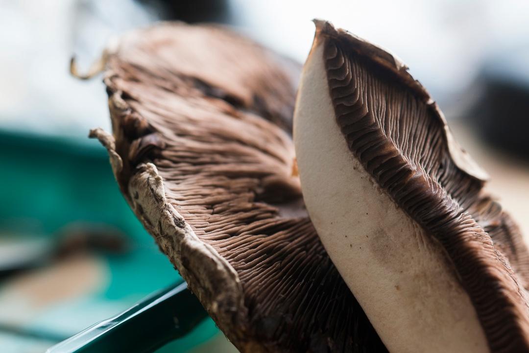mushroom_portabella_closeup2_1080px
